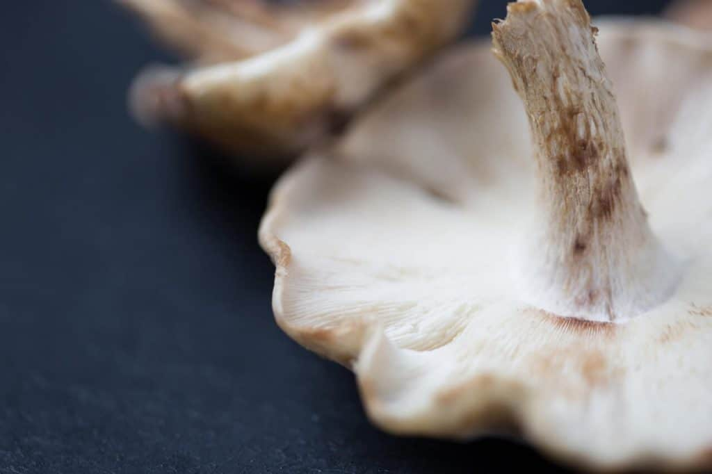 Find out about Mushroom intolerance by uploading your DNA raw data